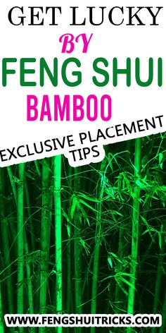 which direction to keep bamboo tree how many bamboo stalks are lucky lucky bamboo dying meaning #luckybamboo plant benefits 3 layer lucky bamboo plant meaning where to place lucky bamboo in office lucky #bamboocare lucky bamboo 18 stalks meaning Feng Shui Lucky Bamboo, Lucky Bamboo Plants, Plant Meanings, Bamboo Care, Bamboo Stalks, Meant To Be, Tips, Counseling