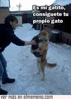Amor de perro y gato