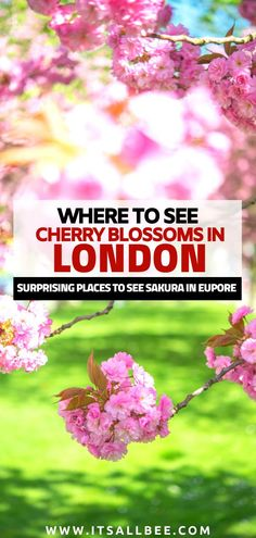 Cool places to see the spring cherry blossom in London and other cities in Europe besides Japan. World Travel Guide, Europe Travel Tips, European Travel, Travel Guides, Travel Destinations, Day Trips From London, Things To Do In London, Sakura Cherry Blossom, Cherry Blossoms