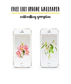 Download two high-resolution Free Lily iPhone Wallpaper this spring with enthralling gumption
