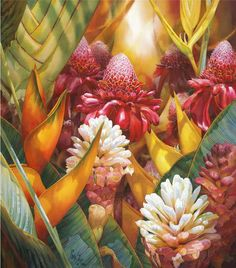 flowers - Darryl's Beautiful Flowers  Darryl Trott  Tropics Alive