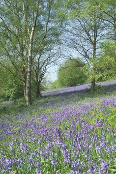 Bluebell Walks - Bluebells on the Malvern Hills
