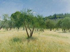 Olive Trees in the Sun