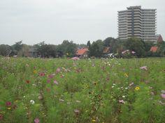 Wageningen in Gelderland