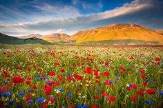 Every year, in Castelluccio di Norcia, a great show could be seen: the Fiorita, an explosion of colors and smells.