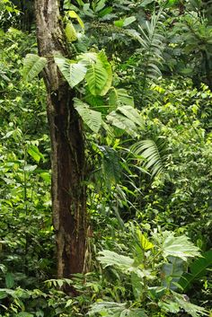 Mindo - forêt tropicale
