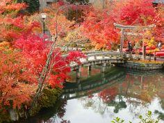 京都の中でも別格の美しさ!「永観堂」3000本の紅葉に息をのむ | RETRIP Kyoto Japan, Art World, Autumn Leaves, Nature, Places, Archipelago, Flowers, Animaux, Naturaleza