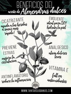 http://tantrasurbanos.com/beneficios-del-aceite-de-almendras-dulces/