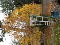 Montrose garden arbor.