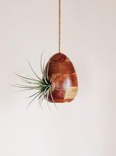 I turned this bird feeder from target into a air plant holder.  An affordable way to add a chic touch to your home.  This is from my Instagram @Moorea Seal.  Follow along on my instagram for peeks into my home.