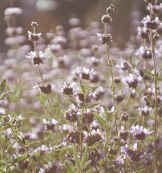 L.A. Stories (via Besotted Blog) #garden #wildflowers