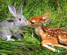 Thumper And Bambi irl