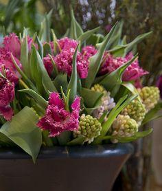 Blumen #Mauch   Singen. http://www.blumen-mauch.de/