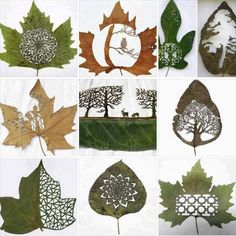 Leaf Art - Perfect for Cards  Buy and Sell Greeting Cards at www.WrittenCards.com