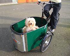 Dog - a cargo bike for doglovers