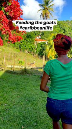 Goats, Caribbean, Travel Tips, Island, Life, Travel Advice, Islands, Travel Hacks, Goat