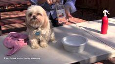Elimina El Mal Olor De Tu Mascota (Perros Y Gatos).-