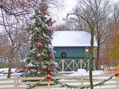 Bow-decorated outdoor tree.