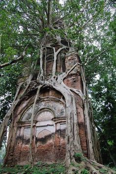 "RΛMIN NΛSIBOV on Twitter: ""This tree grew around this building… """