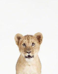 Pequeños Gigantes: ¡Increíbles Fotos de Animales Bebés!