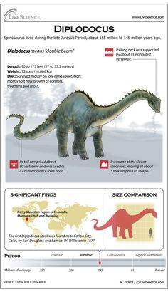 Diplodocus was a long-necked, long-tailed dinosaur that roamed western North America in the Jurassic Period. Its average length was 90 feet meters). Dinosaurs Live, Dinosaurs Preschool, Jurassic World Dinosaurs, Jurassic Park World, Dinosaurs Series, Preschool Crafts, Dinosaur Facts, Dinosaur Fossils, Jurrassic Park