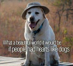 Think about that. I Love Dogs, Puppy Love, Cute Dogs, Funny Dogs, Animal Quotes, Dog Quotes, Labrador Quotes, Dog Pictures, Animal Pictures