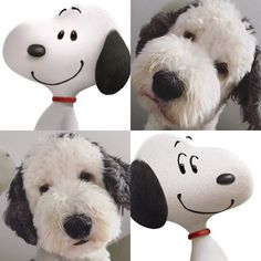 11 Cute Dog Breeds That Turned Our Hearts to Mush - alle lieben snoopy - hund Sheepadoodle Puppy, Cockapoo Puppies, Cavachon, Snoopy Pictures, Puppy Pictures, Cute Dogs Breeds, Dog Breeds, Tierischer Humor, Snoopy Wallpaper