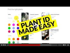 Two amazing apps for plant identification that actually work instead of plant id apps that don't work. Tested by an avid gardener! Unique Plants, Cool Plants, Google Lens App, Identify Plant, What Kind Of Dog, Garden Planner, Plant Identification, Planning And Organizing, Free Plants