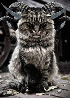 ☮✿★ DARK STYLE GOTH CAT ✝☯★☮