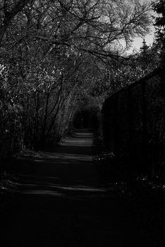Who's waiting at the end of the path #photography
