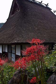 "Scenery of Japan.  ""Miyama no sato"" in Kyoto Miyama.   萱葺きの家と彼岸花・・・日本の秋の原風景。"
