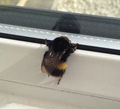 Technically she would be waiting for her scouter bee girlfriend because boy bees don't leave the hive but still cute 😊 Cute Creatures, Beautiful Creatures, Animals And Pets, Baby Animals, Bees Knees, Cute Funny Animals, Animal Pictures, Funny Tweets, Funny Memes