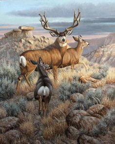 King of The Breaks oil artist Cynthie Fisher Wildlife Paintings, Wildlife Art, Animal Paintings, Animal Drawings, Elk Pictures, Hunting Art, American Animals, Deer Art, Tier Fotos