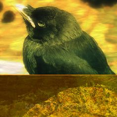 Black Bird Animal Nature Photography fine art by ZenzPhotography,