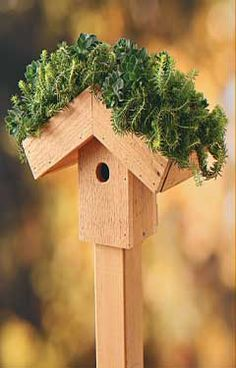 Green-Roof Birdhouse - A few extra tips to make your project a success: For winter, put your birdhouse in the garage, or just replace plants in spring.  Succulents are a good choice because they do well in shallow soil.  Moss is a good plant option for birdhouses that will be in shade.  Put drainage holes in the overhanging area of the roof to avoid root rot in wet weather.