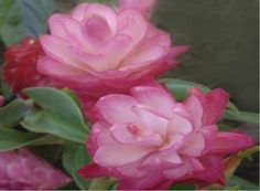 fantasy floral art - Google Search