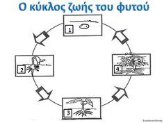Δραστηριότητες, παιδαγωγικό και εποπτικό υλικό για το Νηπιαγωγείο: Η σπορά στο Νηπιαγωγείο: Ο κύκλος ζωής του μικρού σπόρου