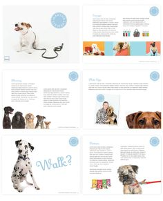 Quirky Dog Walking Business Names