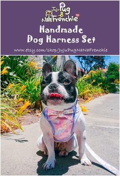 Frenchie harness Un Dog Harness, Dog Leash, Small Puppies, Dogs And Puppies, Dog Lover Gifts, Dog Lovers, Dog Safety, Pink Dog, Bulldog Puppies
