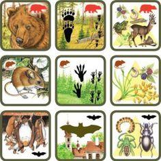 * Natuurspel! Zoek het dier bij zijn sporen en voedsel! 3-6