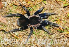 SALE - | Spiders | Pinterest | Insects