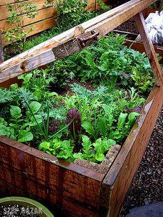 Emelt ágyás zöldségtermesztés