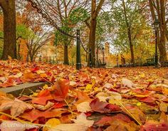 http://washingtonsquareparkerz.com/jackdarylphotography-leaves-washingtonsquarepark-nyc/   @jackdarylphotography #leaves #washingtonsquarepark #nyc