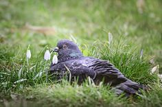 Spring is coming by Cretu Stefan on Spring Is Coming, Bird, Street, Animals, Animales, Animaux, Roads, Birds, Animal