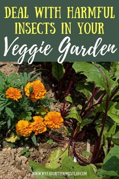 Ready to learn about keeping bugs out of your garden, without those pesky bugs eating vegetable plants? In this article, we explain how to leave the helpful insects and organic gardening tips for getting rid of harmful insects, perfect for beginning gardeners and homesteaders. Tap to read more from My Favorite Homestead   Gardening and Homesteading Tips Starting A Vegetable Garden, Vegetable Garden For Beginners, Gardening For Beginners, Harmful Insects, Homestead Gardens, Eating Vegetables, Hard Work And Dedication, Organic Gardening Tips, Small Farm