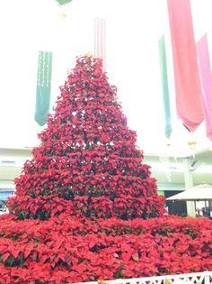 季節のデコレーションアイテムのしまい方  Mele Kalikimaka (ハワイ語で メリークリスマス) 日本はイブですね。夜寝るときには、サンタさんへのクッキーとミルク(時にお酒かな?)とトナカイへのニンジンを置いて上げてくださいね。  さて、オーナメントや色々なクリスマス限定のデコレーショングッズ、皆さんはどの様に片付けていますか?段ボール? 我が家はクリスマスカラーのプラスティックBoxです。けして収納スペースに恵まれていないコンド(マンション)生活、ウォークインクローゼットにはこのようなBoxに季節ごとのものがしまわれています。暗くはないけれど、明るくはない場所で箱の色を見るだけで中身がどの季節のものか分かるのでとても便利です。  クリスマスの片付けとともに大掃除、大変ですがやるならスッキリ終わらせたいものですね。ハワイはクリスマス直前の買い物客でカハラモールは大混雑でした・・・  Mama ❤ S