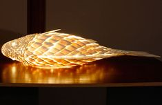 07-Specimen-Fish-Lamp-installation-shot