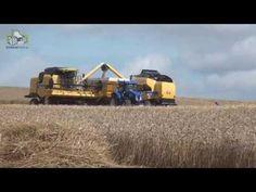 New Holland CX8090 en New Holland TC5070 in actie Trekkerweb