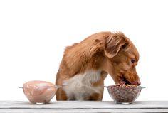 Wir haben Tipps für euch, welches Futter besser geeignet ist für euren Hund. Trockenfutter, Dosenfutter bzw. Nassfutter im Vergleich. Im Hundemagazin Dogbible findet ihr Anregungen für das optimale Futter. Goats, Cow, Animals, High Quality Dog Food, House Dog, Dog Owners, Tips, Animales, Animaux