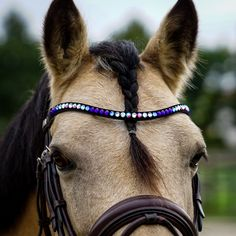 Blue Browband for horses by MagicTack Equestrian Style, Equestrian Fashion, Cottage Crafts, Blue Candy, Horse World, Youtube Stars, Horse Tack, Horse Riding, Girls Best Friend